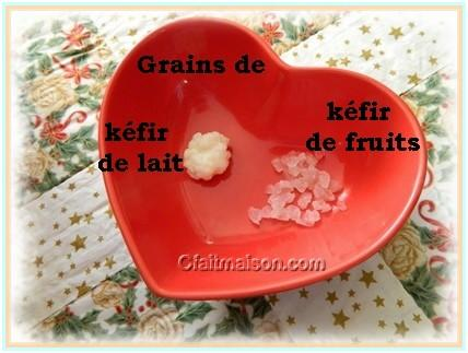 Comparaison grains de kéfir de lait et de fruits
